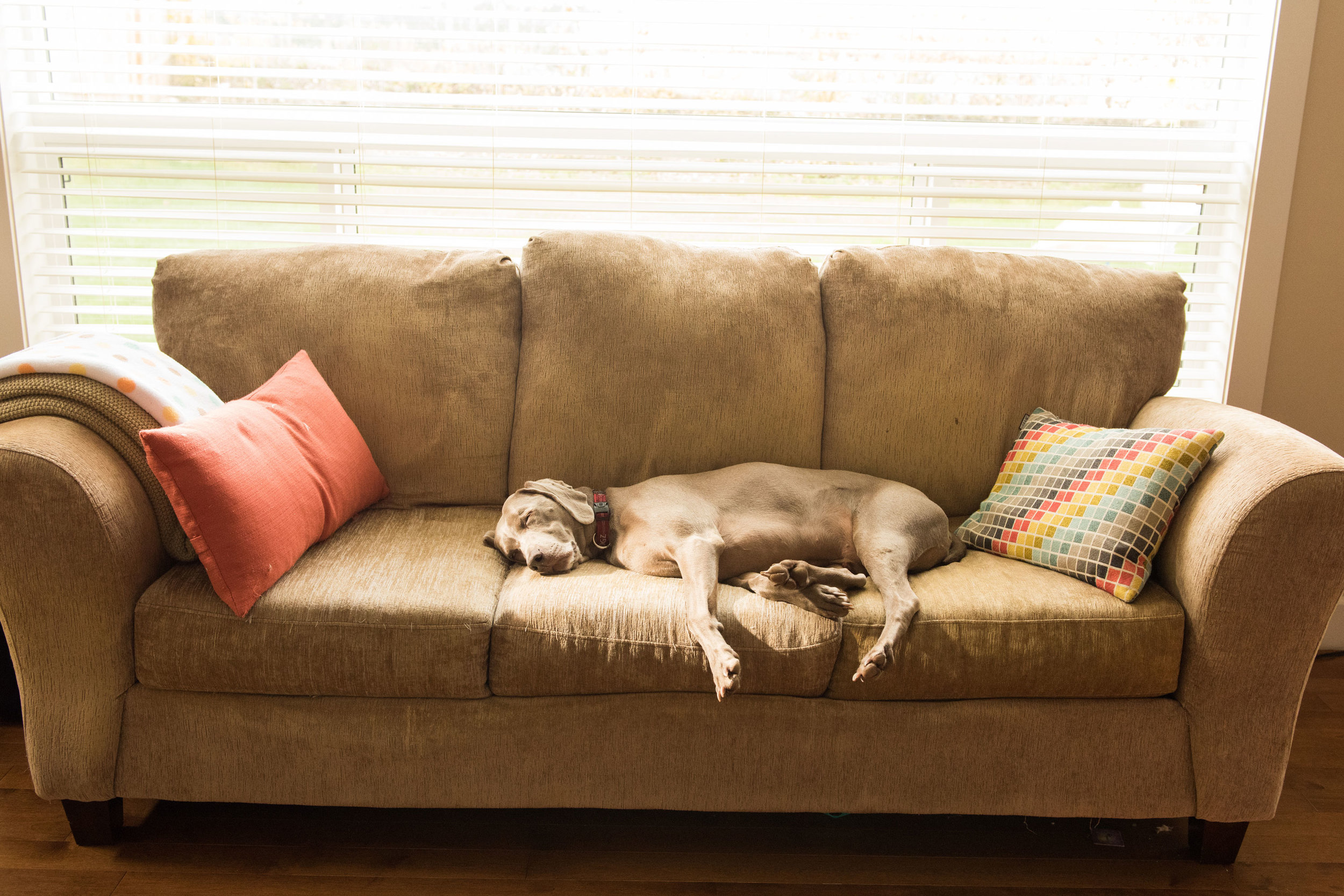 UPHOLSTERY CLEANING -