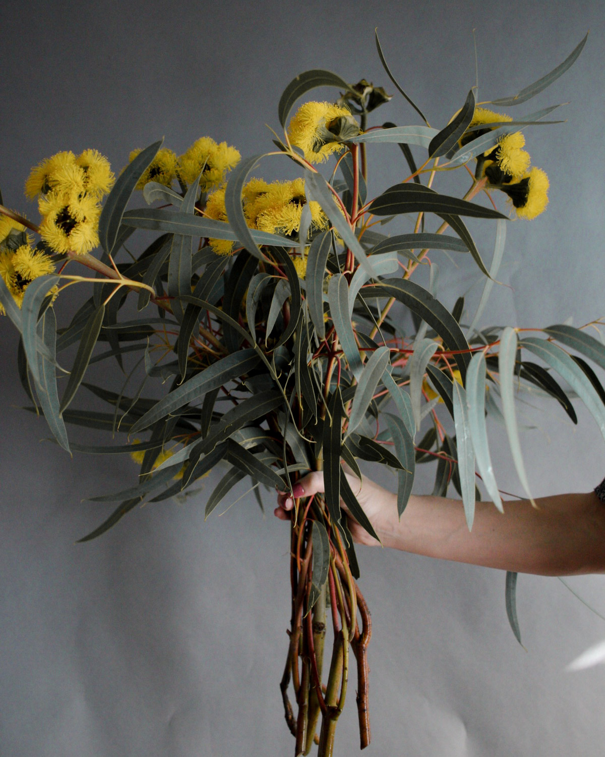 Muted Color - Yellow Bouquet- Forage Ojai.jpg