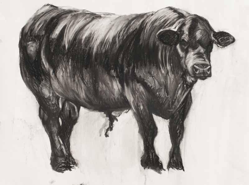 Freddie the Bull