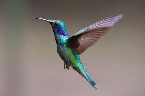 resilience hummingbird.jpeg