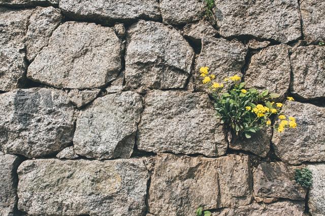 resilience flower.jpg