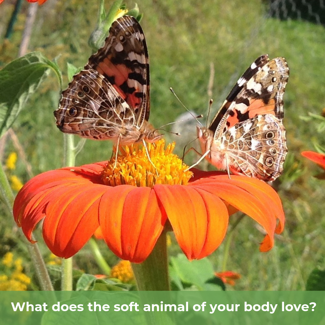 you only have to let the soft animal of your body love what it loves