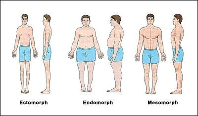 somatotype-body-types.jpg