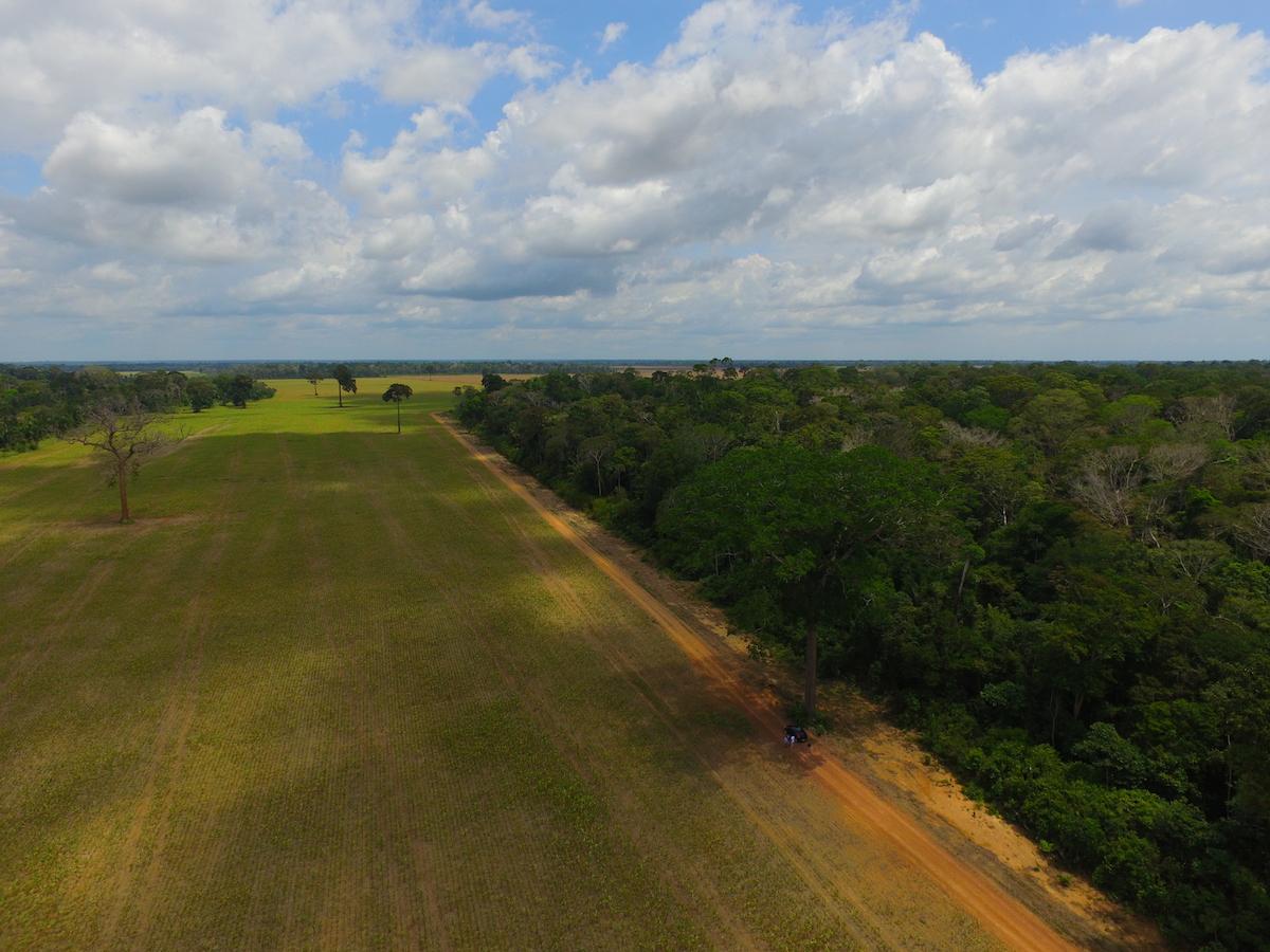 Soybean fields in Belterra.