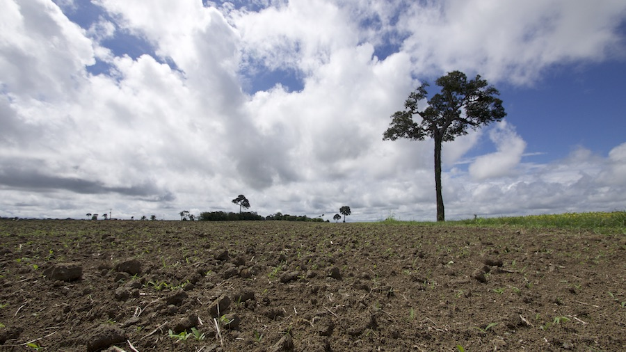Soybean plantation in Belterra