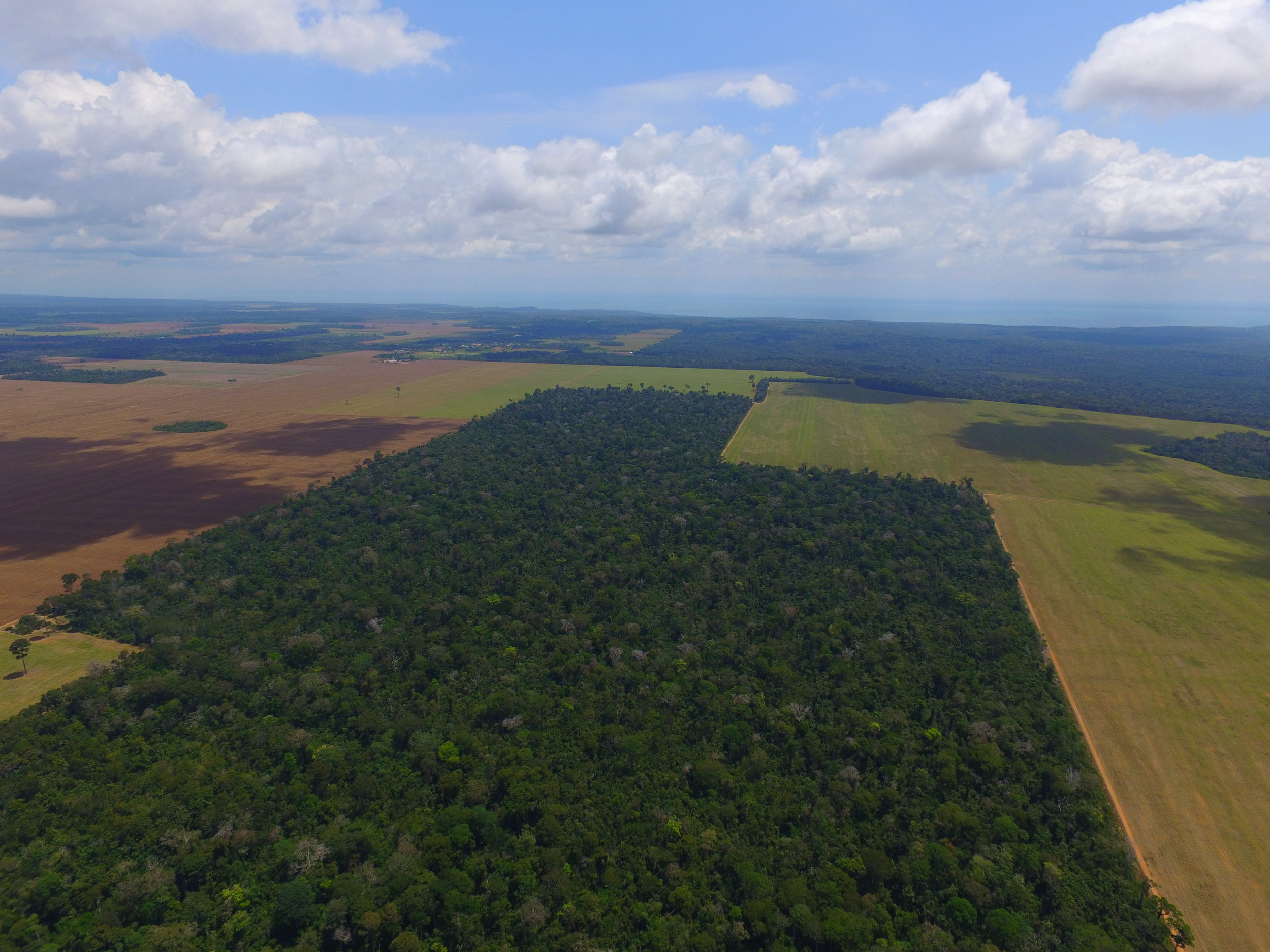 Plantation of Romualdo Rech in Santarém, Pará, Brazil, showing area cultivated for soy production (brown) and adjacent area reforested under judicial mandate. Photo by Marcos Colón and Bruno Erlan, ©Beyond Fordlândia, 2017.