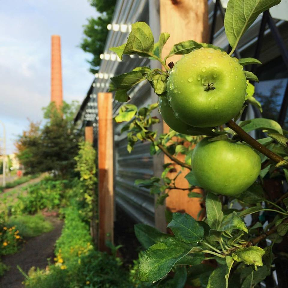apples rv.jpg