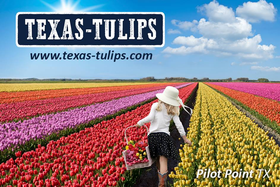 tx tulips.jpg