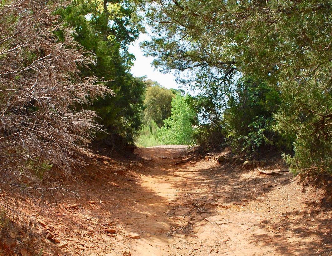 Courtesy of gograpevine.com/northshore-trail