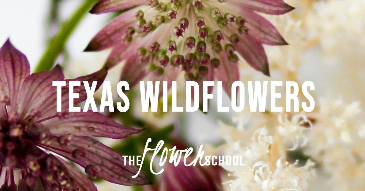 tx wildflowers.jpg