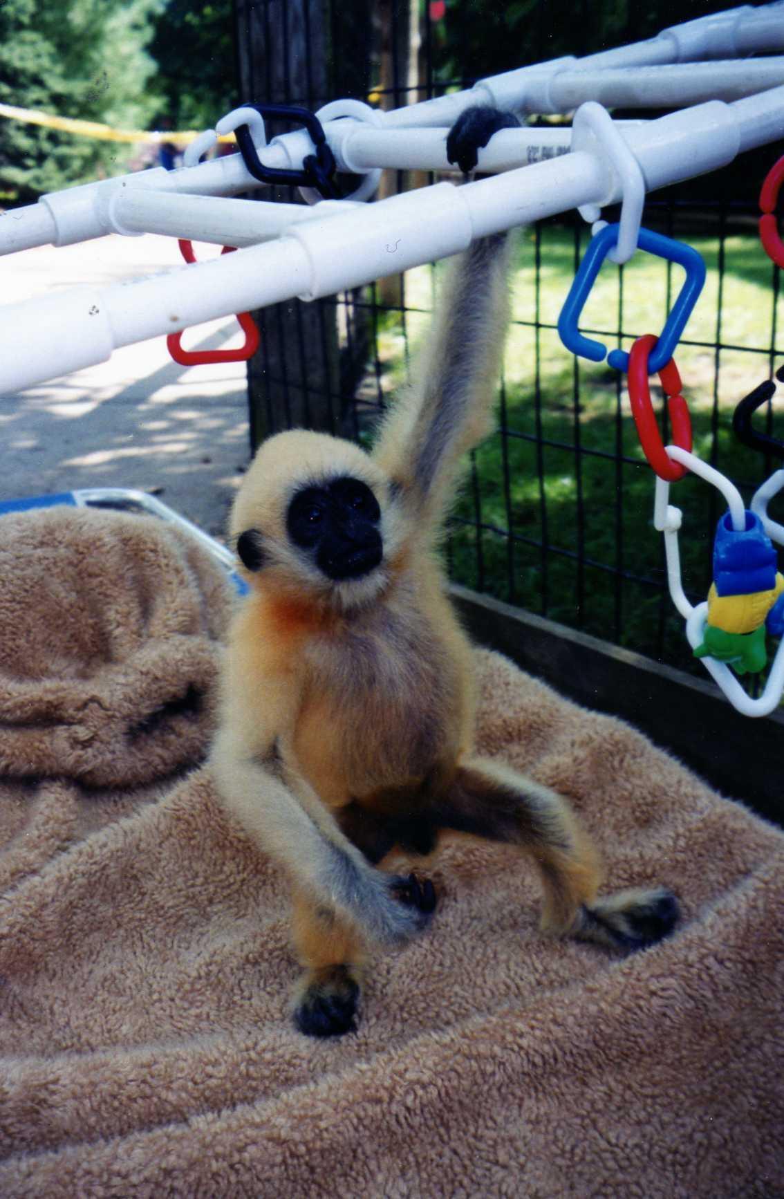102 Gibbon002.jpg
