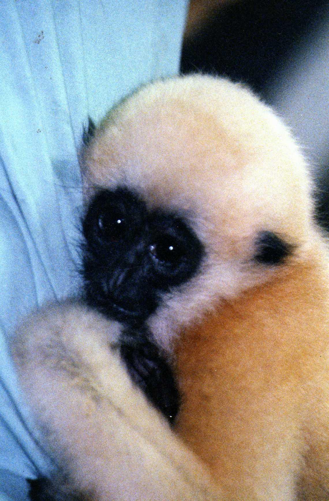 105 Gibbon005.jpg