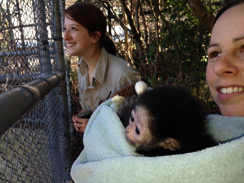 gibbon visits adults 9-10 weeks 1 444.jpg