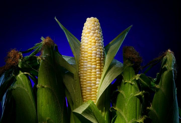 corn in husk.png