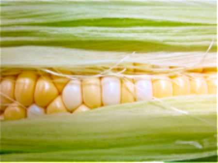 corn closeup.png