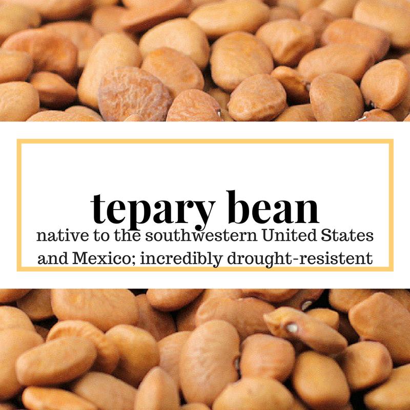 bean10.png