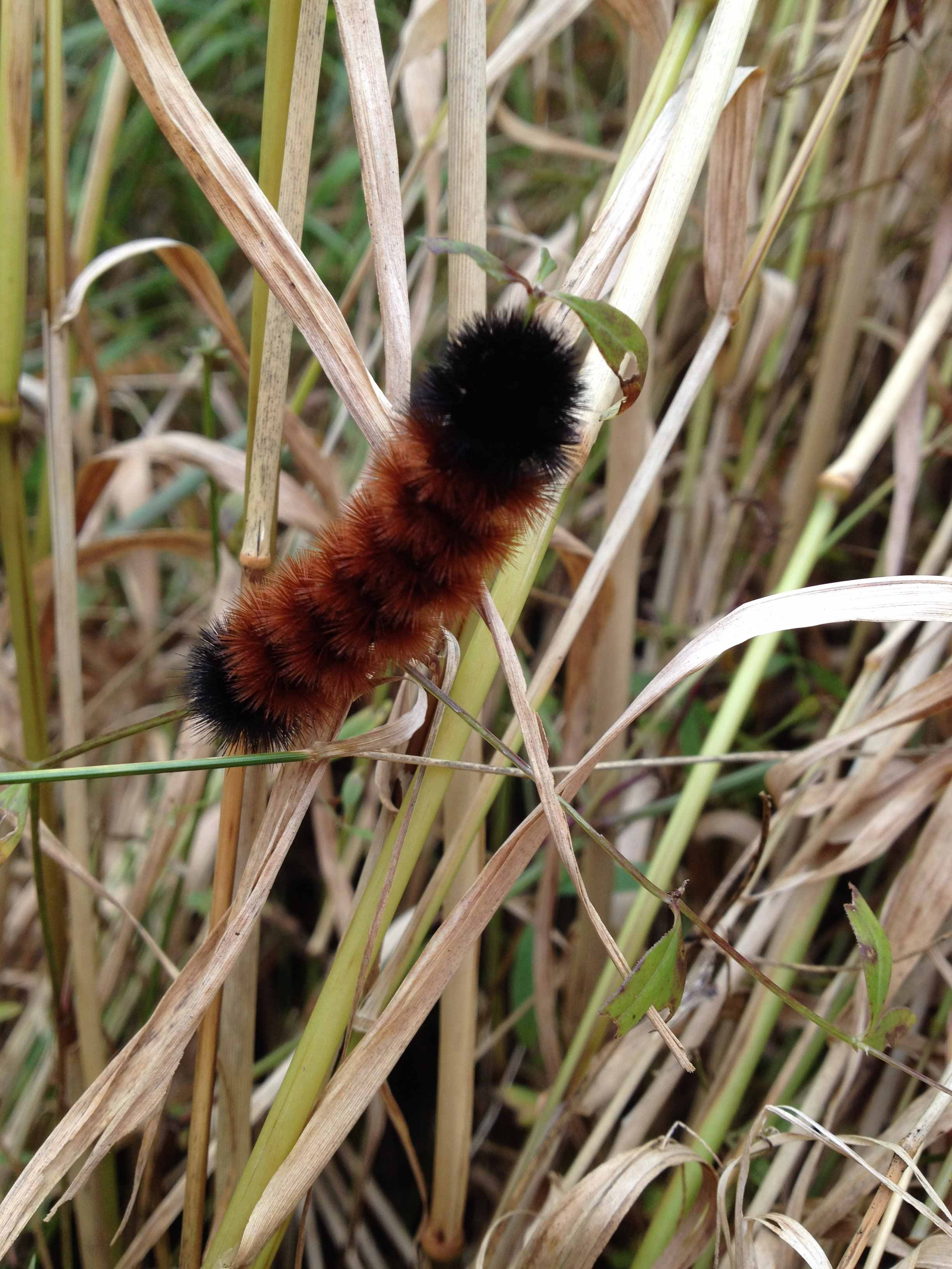 Yestonature-woolybear.JPG
