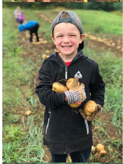 children harvesting potatoes 2018-2.PNG