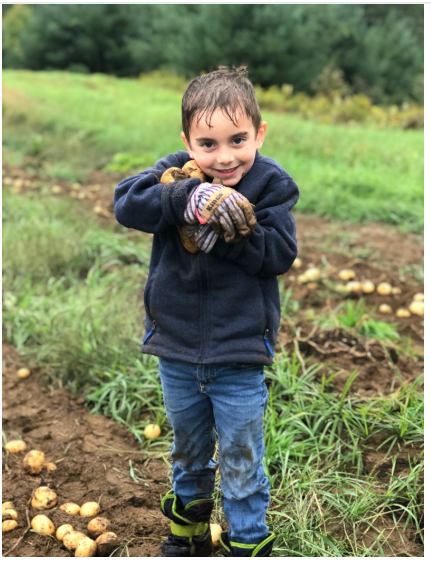children harvesting potatoes 2018-3.PNG