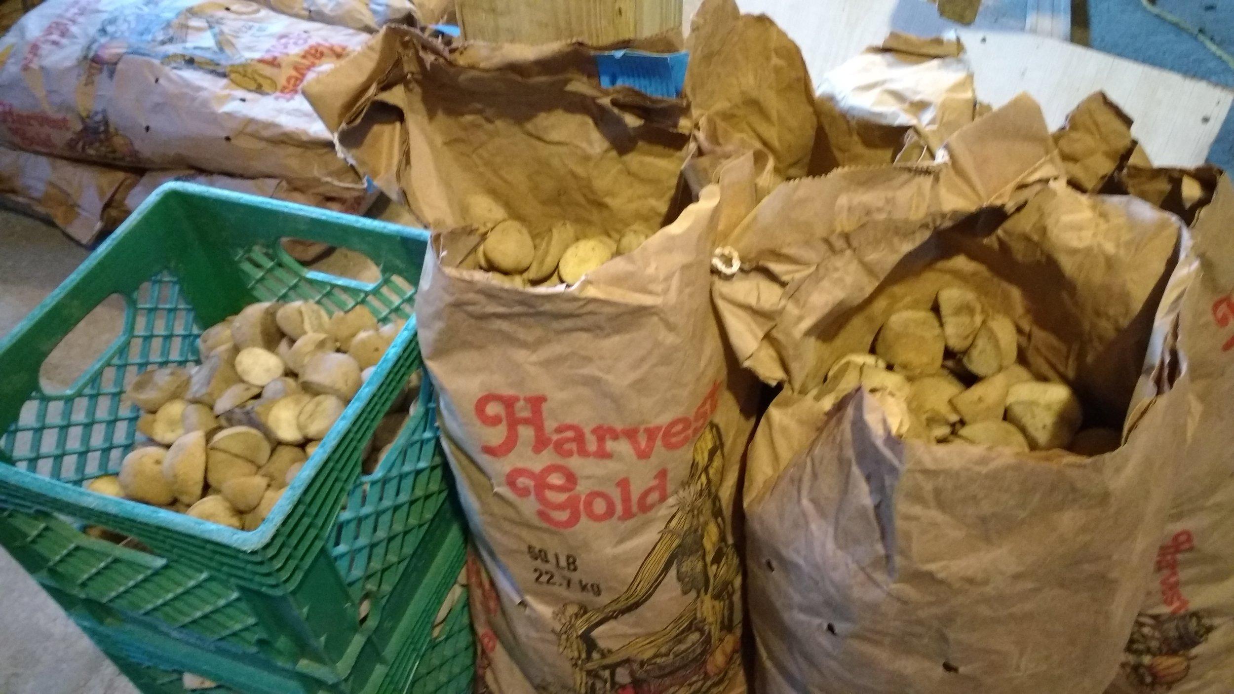 Potato seeds 1.jpg