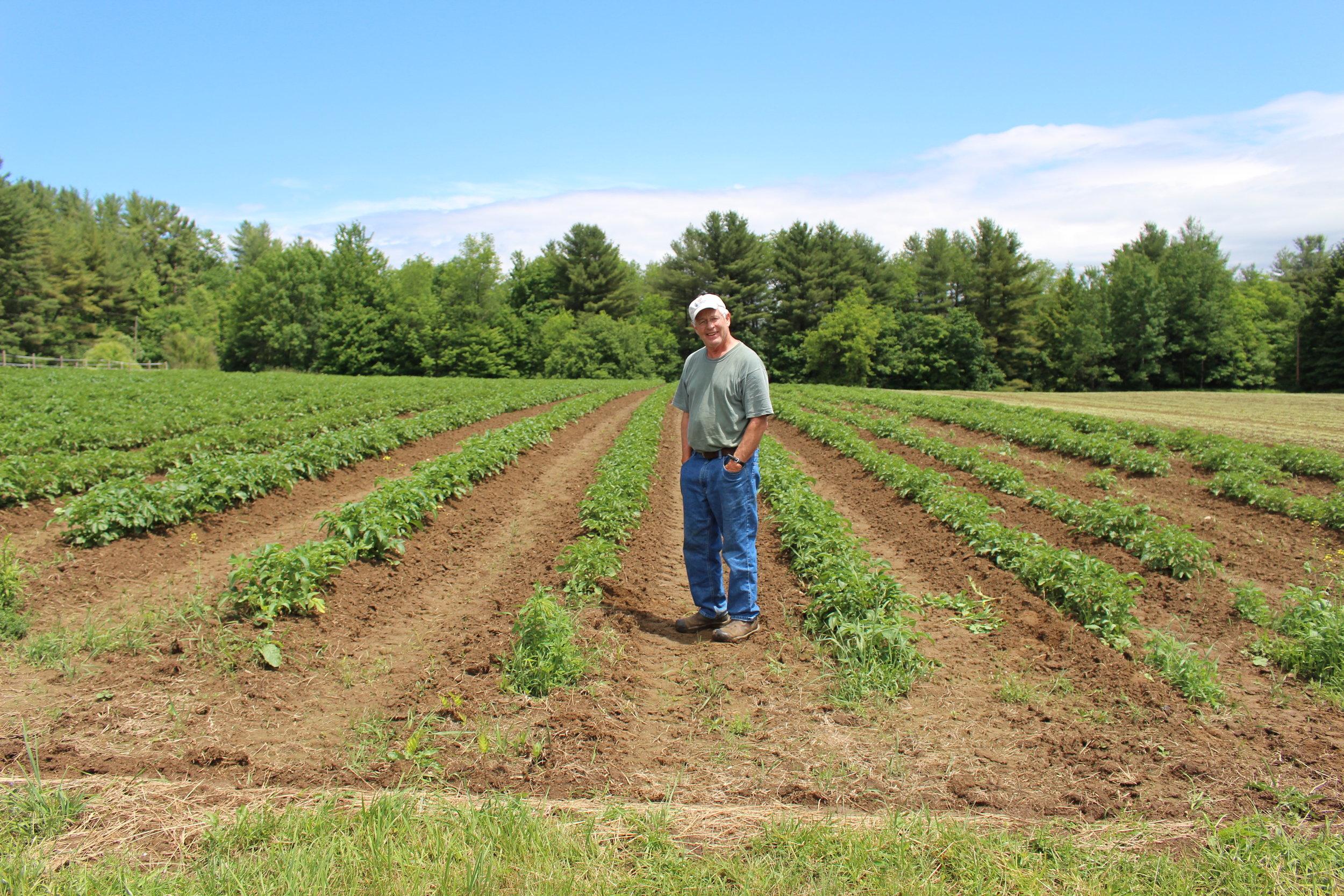 Potato field.JPG