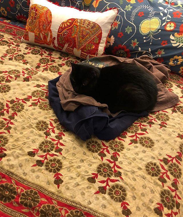 I must always lounge on the topmost thing. #blackcatsrule #mycatrunsmylife