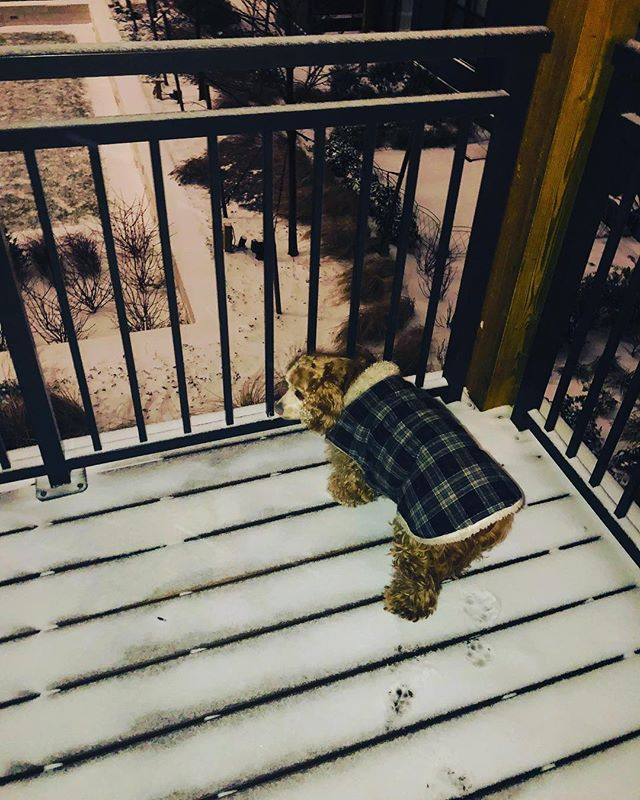 My dog Coco enjoying the fresh snow from the comfort of our balcony ❄️ ⁣ ⁣ We might be Floridians, but we love the snow!! ⁣ ⁣ Stay warm and be safe! 💕 ⁣ ⁣ ⁣ #adoptdontshop #furbabies #snowdogs