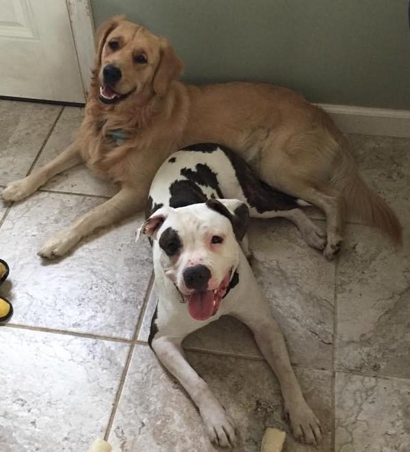 Riley and Harper
