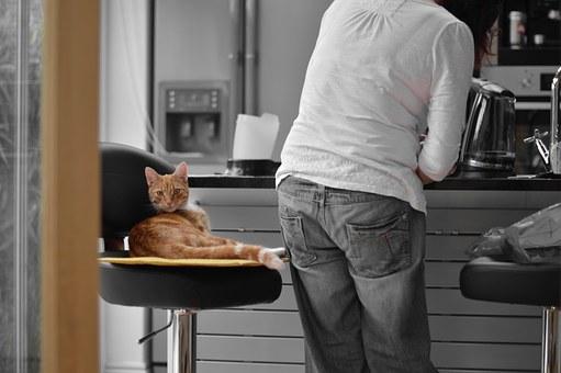 Avoid overfeeding your cat