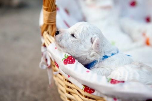 Bringing home puppy