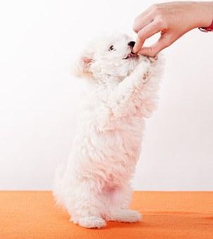 #1. Puppy Food