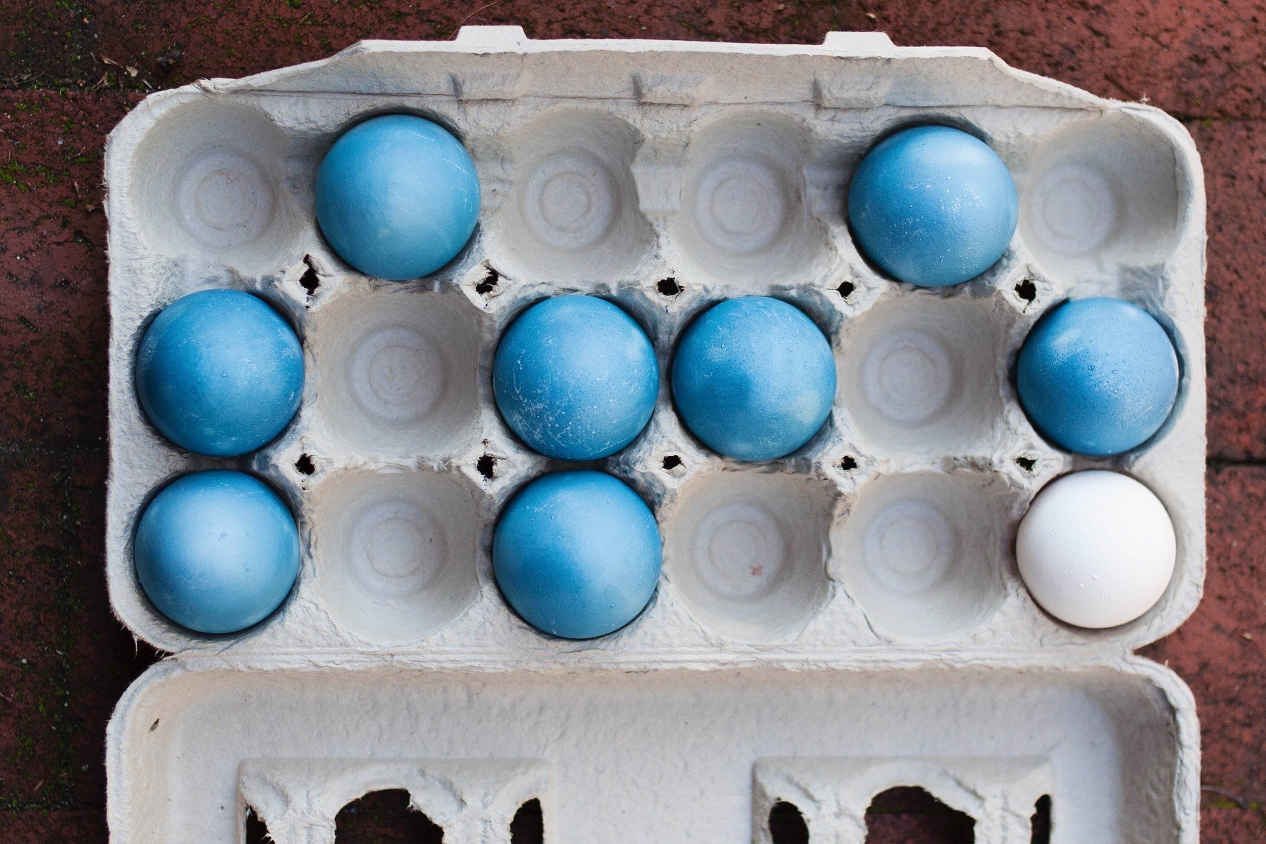 cabbage-dyed-easter-eggs.JPG