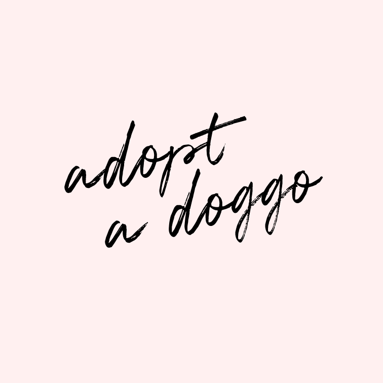 Adopt a doggo.    Doggos and puppers rule! This one has been in the works for a few months, and we can't wait to rescue a sweet doggo (older dog) or pupper (little puppy) and welcome him/her into our home and our family.