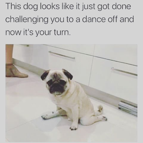 #yougotserved #itson puppy! ⠀ ⠀ .⠀ .⠀ .⠀ .⠀ .⠀ .⠀ #instago #performing #bw #danceeveryday #dancestudiolife #danceintucson #havefun #kindnessmatters #balletdancers #lyricaldancers #hiphopdancers #jazzdancers #contemporarydancers #kindness #gottadance #gottadancetucson #bekind #bekindeveryday #danceteacherlife #family #yogachallenge #workout #yogajourney #yogaeverywhere #positivevibes #yogapose #yogis⠀