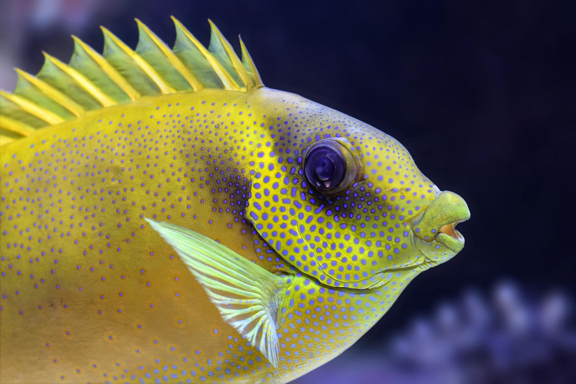 fish-3217645_1920.jpg