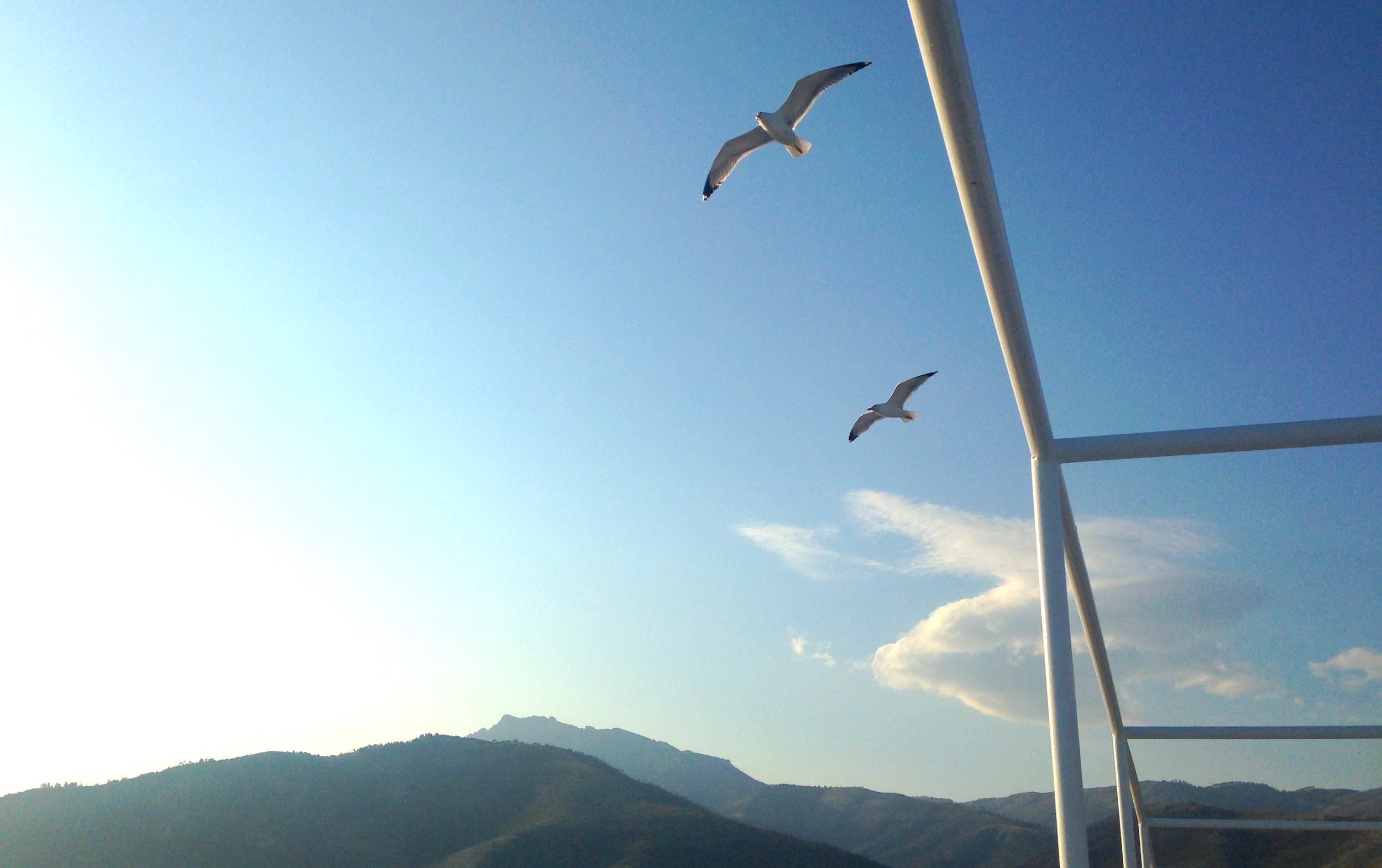 Seagulls flying over the early morning ferry as it leaves the island of Thassos, Greece.