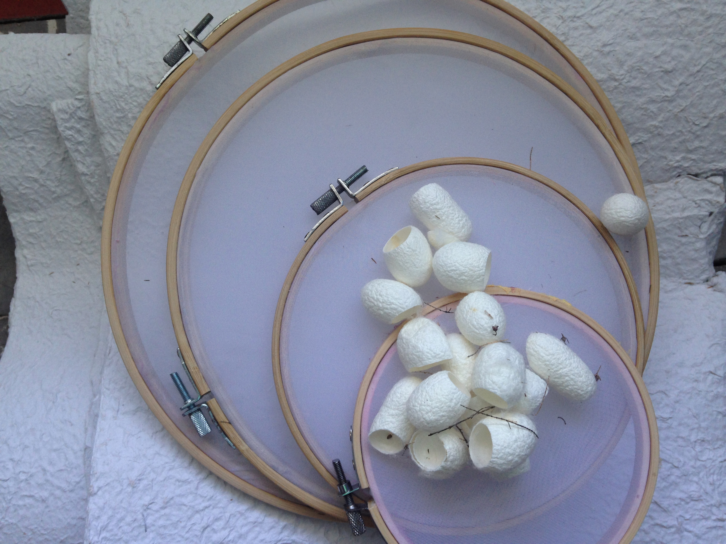 My new papermaking circular embroidery frames, some paper linters and silk cocoons.
