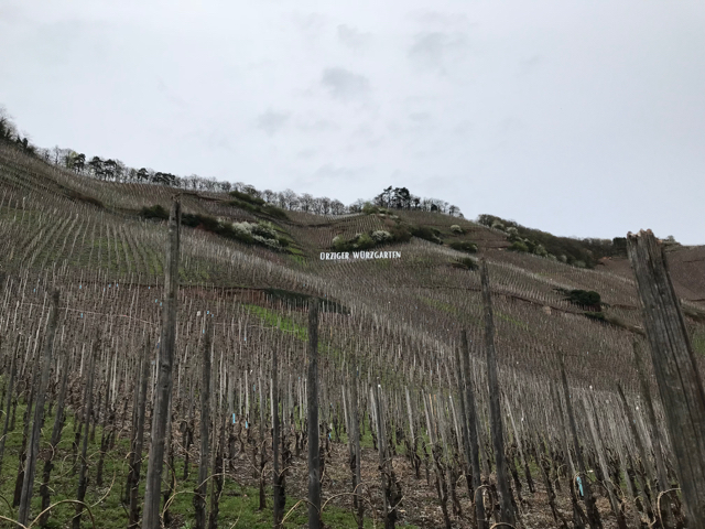 The famous (and famously steep) Ürziger Würzgarten vineyard.