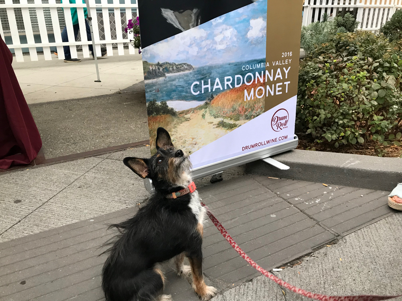 Seattle dogs sit for Chardonnay.