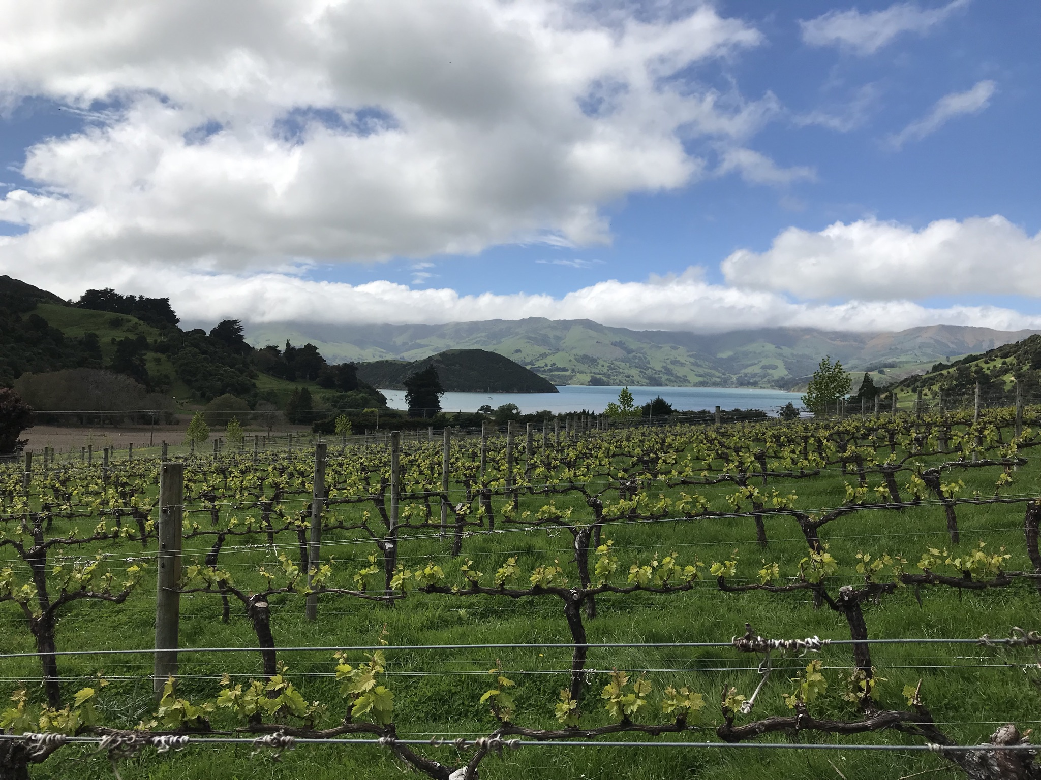 If there's a more stunning environment for growing Pinot Noir grapes than New Zealand, we've not come across it.