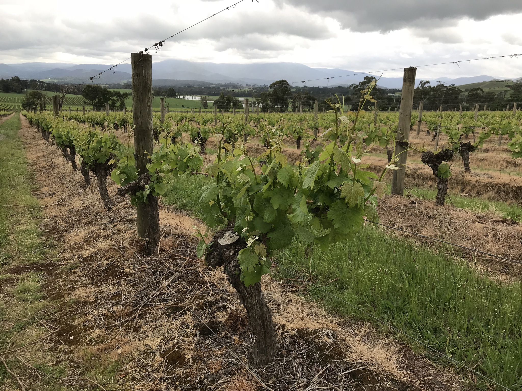 The Yarra Valley in Australia has a well-earned reputation for delicious Pinot Noir.