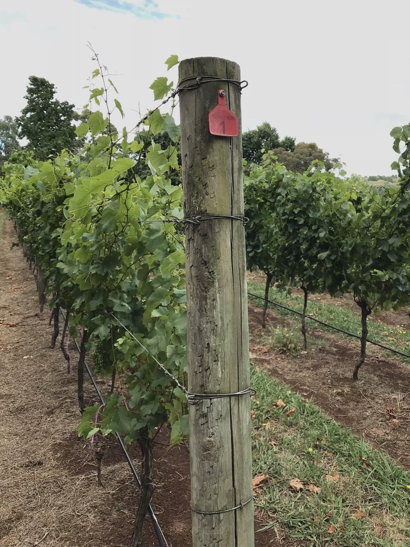 Australia's Mornington Peninsula does truly lovely Pinot Noir.