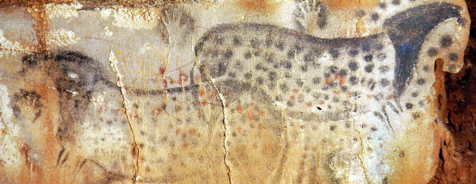 Those startling handprints are a frequent motif in the late Paleolithic period, including the artwork in Pech Merle. A hand was placed on the wall and the artist used pigment that was drawn into a tube with their mouth and blown onto the wall, creating the outline of his or her hand. Cro-Magnon people lived only at the entrance of caves, or in shallow depressions within the giant limestone cliffs. Experts believe the interior of caverns was reserved for sanctuaries, devoted to the worship of animals, magic or the hunt.