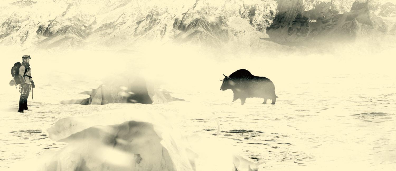 black-yak-header-herr-fischer.jpg