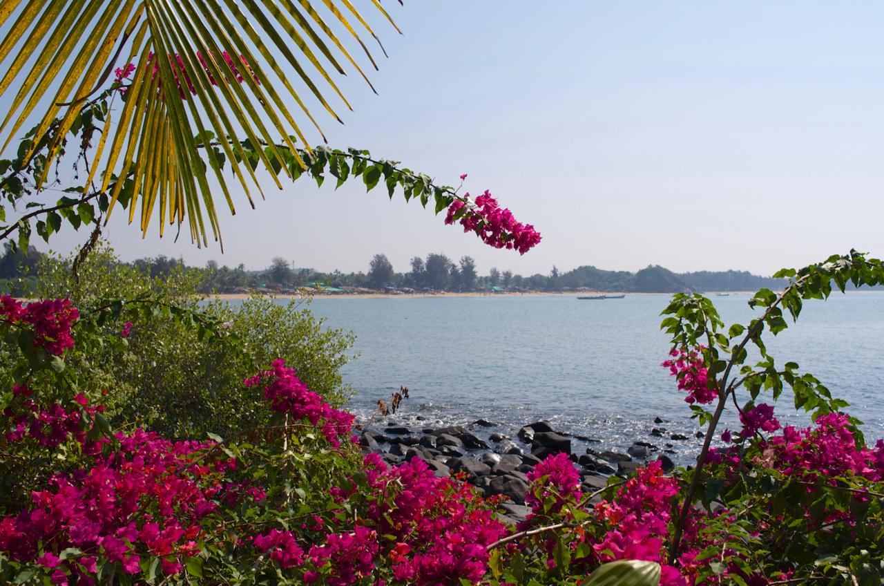 Yoga Explorers yoga holiday in South Goa - beautiful bougainvillea