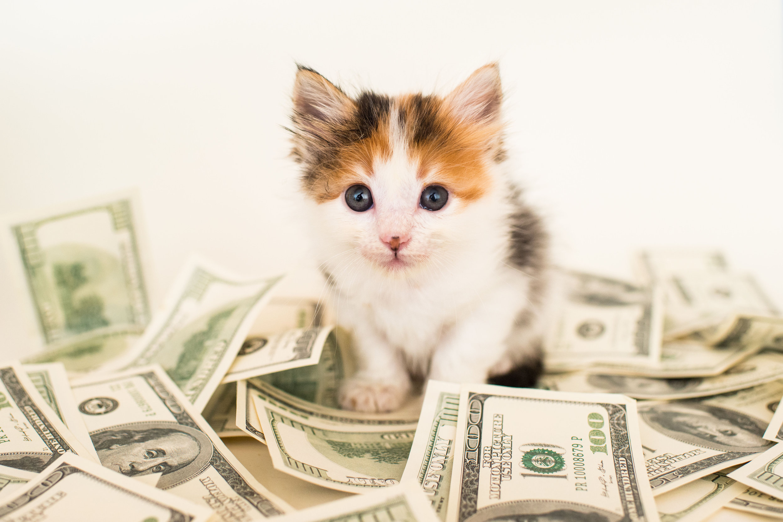 A cat among the dollars…because…well, why not?