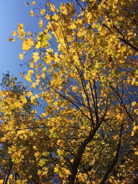 I feel alive, when the Winter sunlight hits the last yellow leaves of Fall and turns them into pure GOLD. -