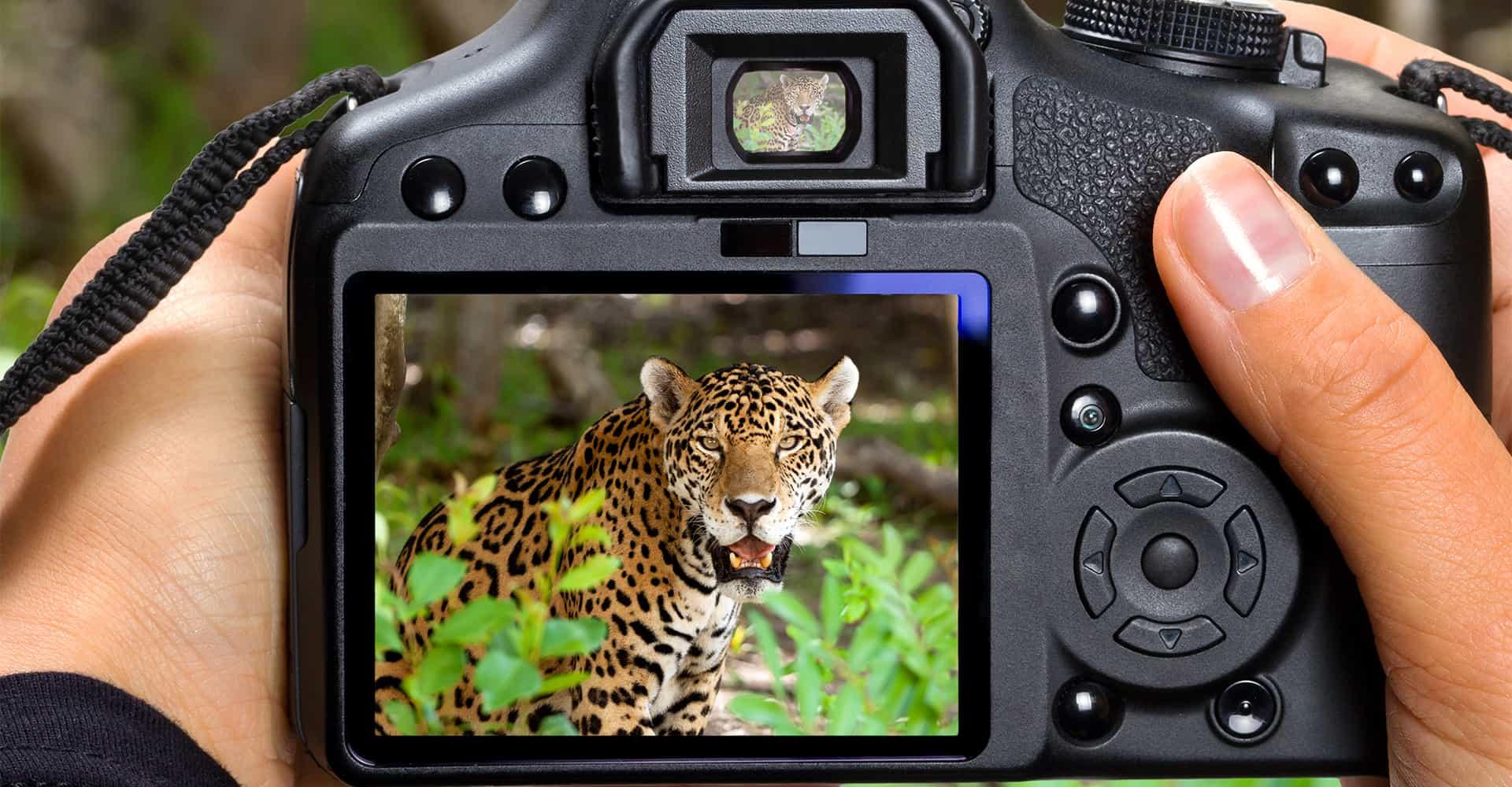 Photo & Video5.jpg