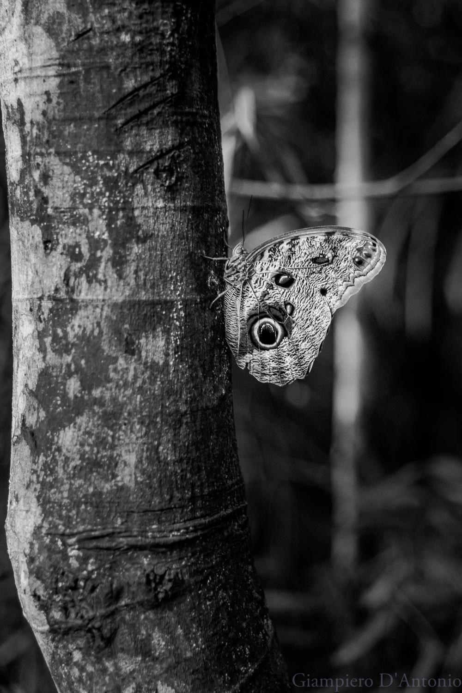 Wild Life in Rio00001.jpg