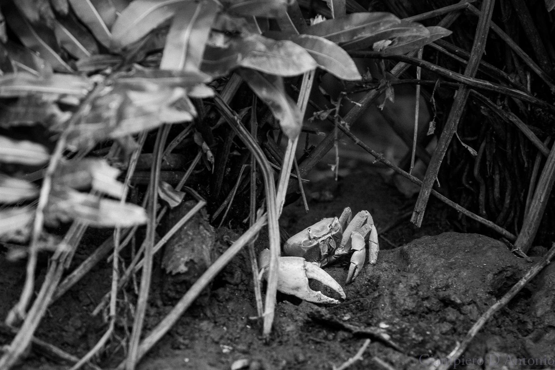 Wild Life in Rio00007.jpg